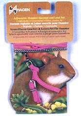 http://az24.vn/hoidap/cach-nuoi-chuot-hamster-con-khi-khong-co-me-d2887057.html