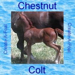 chestnutcolt
